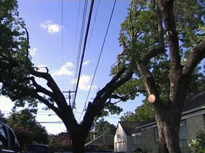 Oncor Tree-Trimming Also Snips Home Prices: Residents