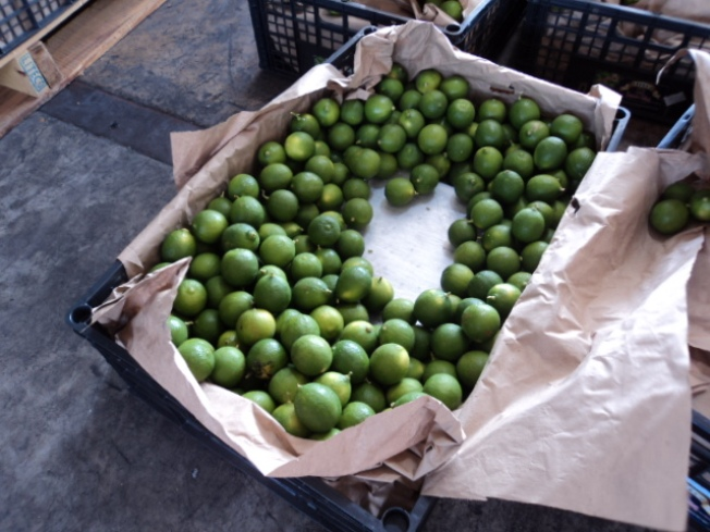 Ton of Pot Found Among Load of Limes