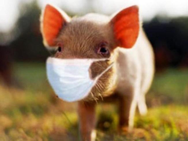 Swine Flu Declaration May Mean Little to N. Texas