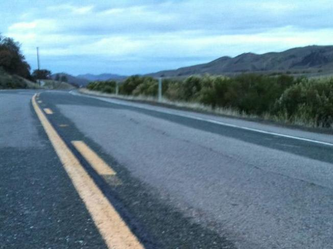 Endangered Ocelot Found Dead on Texas Highway