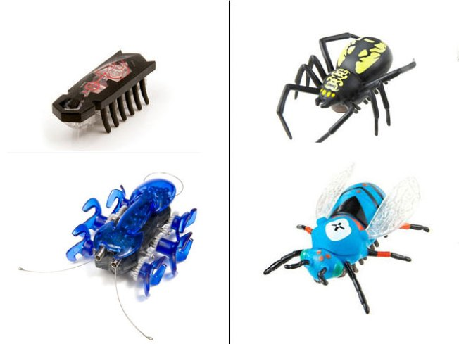 Texas Company Files Lawsuit Over Toy Bugs