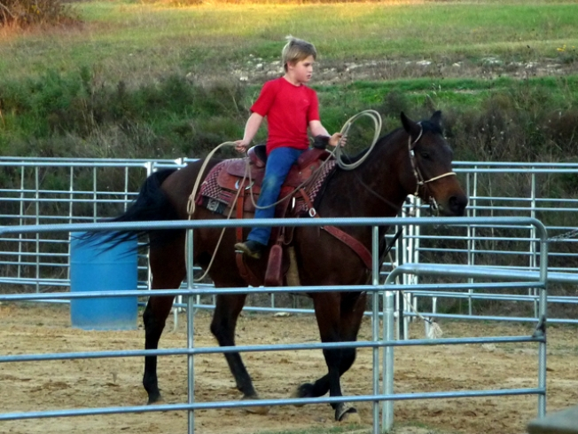 Reward for Boy's Missing Mare is Now $8,000