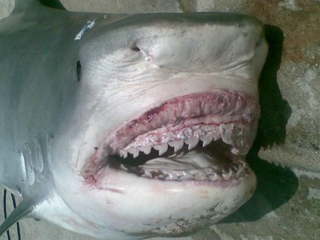 Shark Attacks Rose 25 Percent Last Year