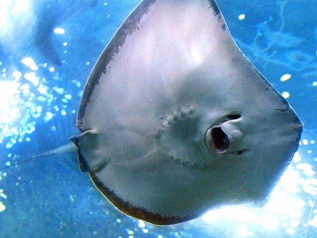 Stingray Attacks Up on South Padre