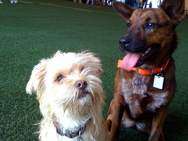 Dog Park to be Put Down