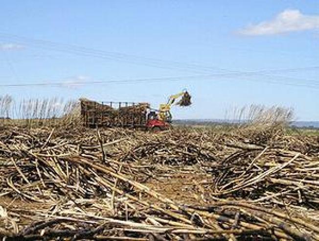 Florida Sugar Land Deal Recut to Protect Everglades