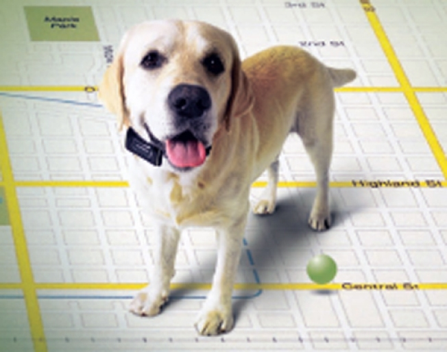 GPS: Good for Pets, Questionable for Kids