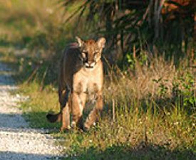Hope for Florida's Wildlife Emerges From Climate Meeting