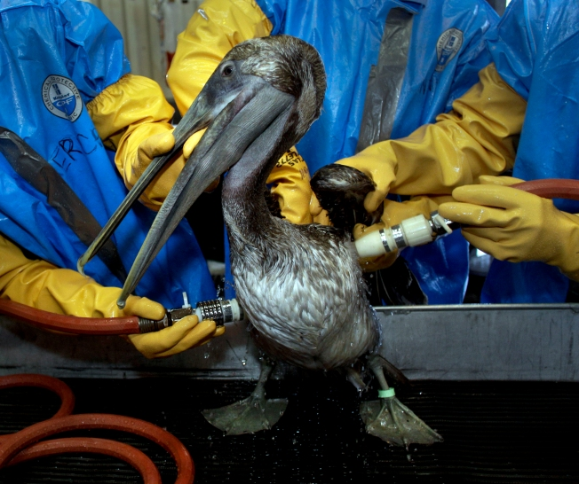 Huge Gulf Spill Draws Few Donations