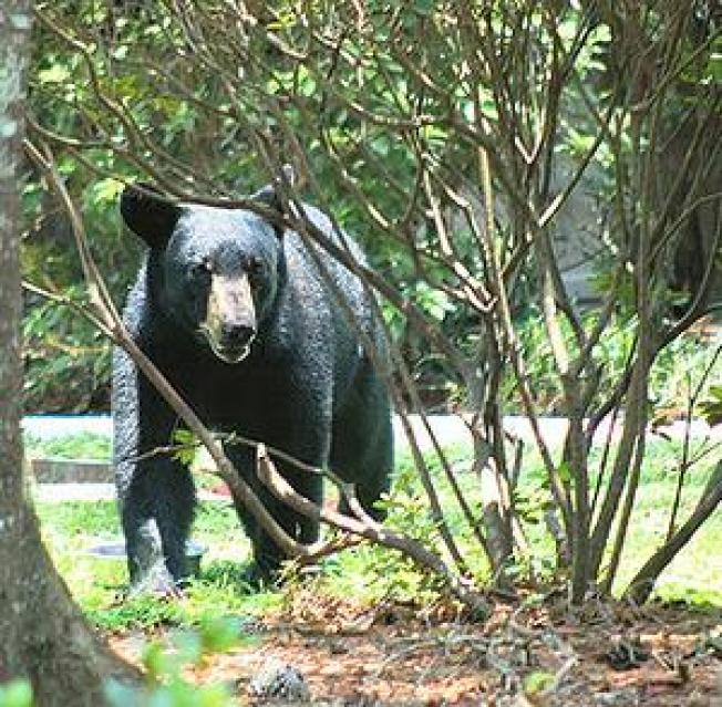 Florida Wildlife Crowded by Swelling Human Population