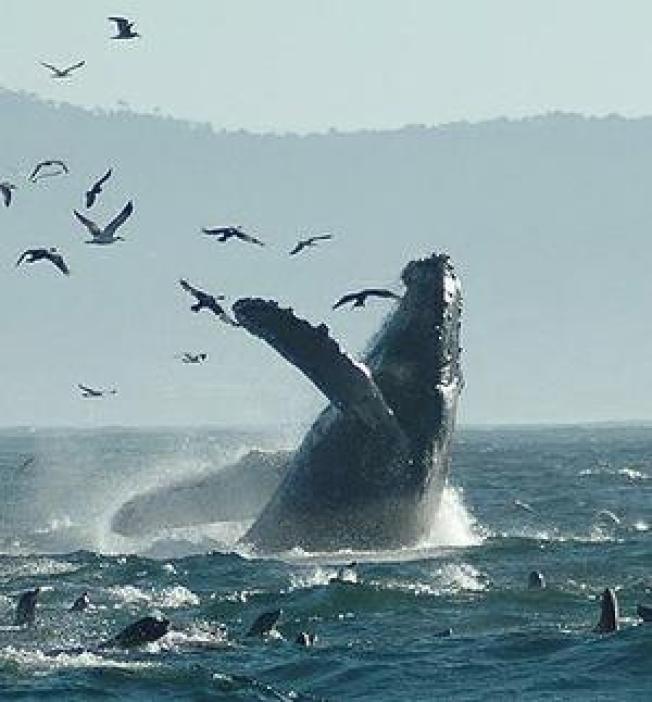 Navy Wins, Whales Lose U.S. Supreme Court Sonar Case