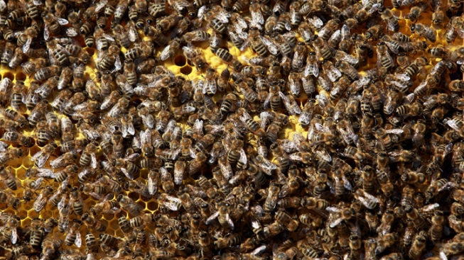 UNT Bees to Be Relocated
