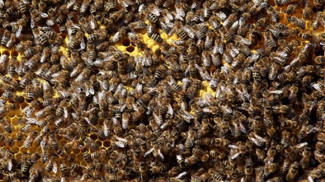 UNT Bees Get Reprieve