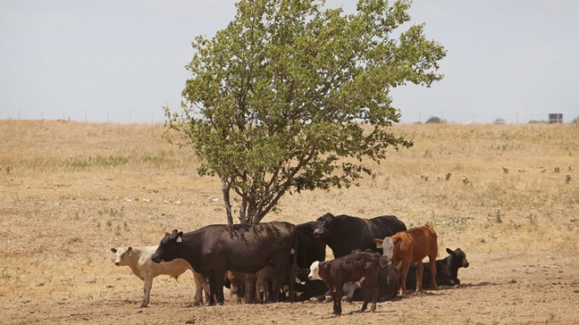 Rustling Costing Ranchers Millions in Poor Economy