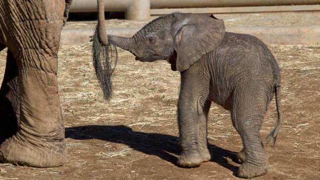 FW Zoo Breaks Spring Break Attendance Record