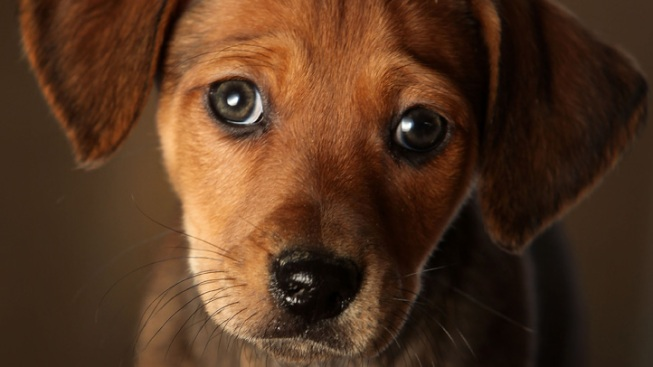Pet Store Ban Passed in San Diego