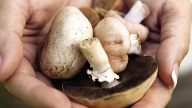 Officials Say 2 Dead, 4 Sick From Wild Mushrooms