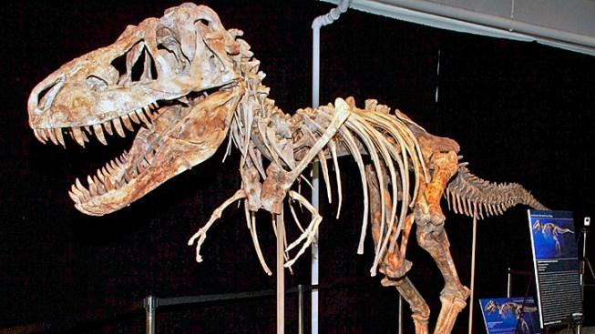 U.S. Sues to Return Dinosaur Skeleton to Mongolia