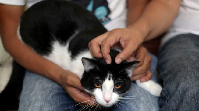 Morris the Cat Runs for Mayor in Mexico