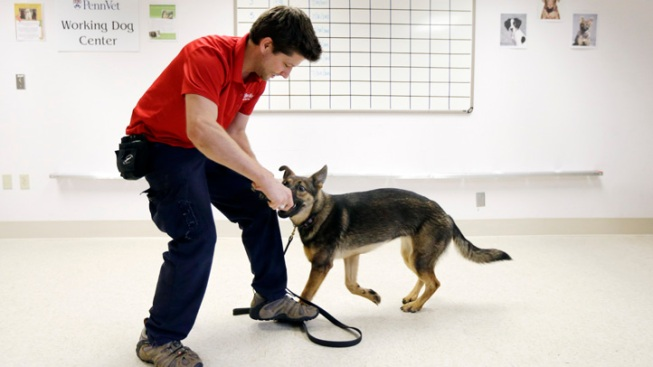 Dogs Help Sniff Out Ovarian Cancer in Study