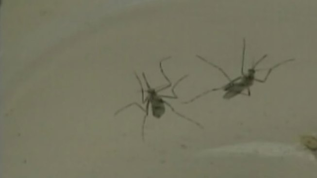 Denton County Starts West Nile Battle Early