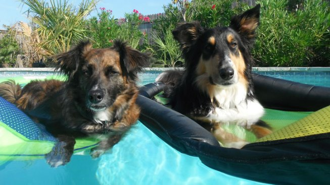 Pooch Pool Party in Grapevine