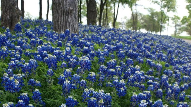 Worth the Drive: Bluebonnet Trails Festival