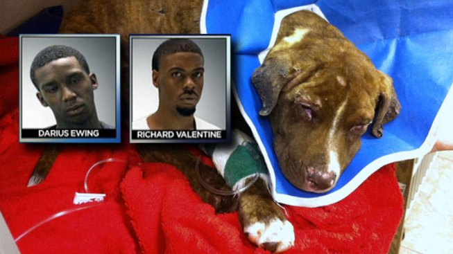 Last of 4 Charged in Pup's Burning Death Plead