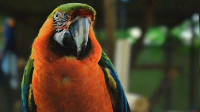 El Paso Zoo Features Animal Artwork