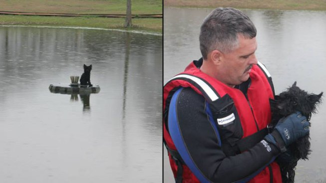 Dog Rescues In Dallas Fort Worth