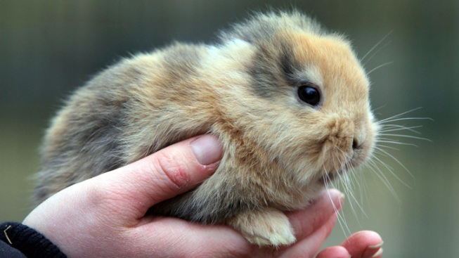 "German Celebrity Bunny ""Til"" Accidentally Killed by Cameraman"