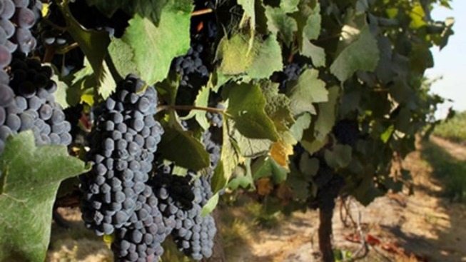 Grapevine Wine Tour Offers Simple Samples