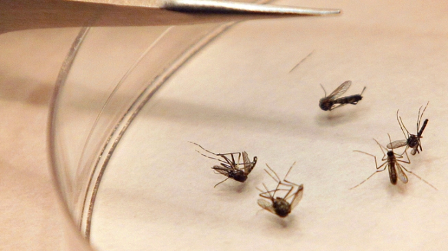 First West Nile Death Recorded in Lamar County