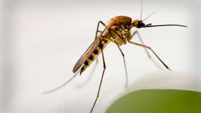 Half of Cases of West Nile in Texas