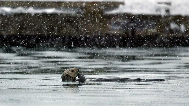 Alaska Oil Pipeline Leak Stopped, Threat to Wildlife Unclear