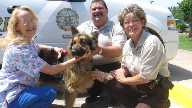 Service Dog Saves Owner