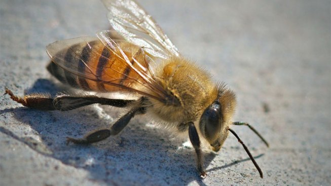 South Texas Man, 65, Dies After Bee Attack