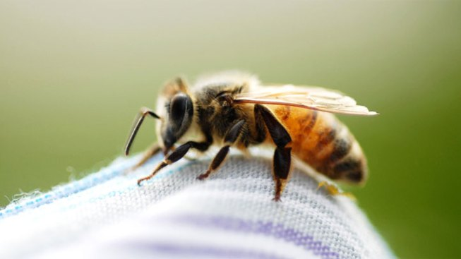 UTA Golf Tourney Called Due to Bees