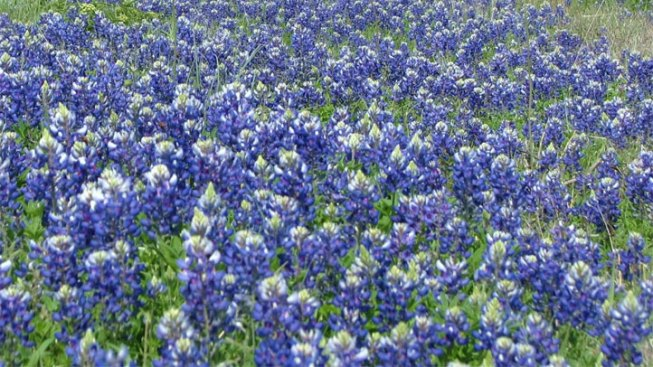 Texas Wildflower Center Forecast: Hold onto Your Hats!