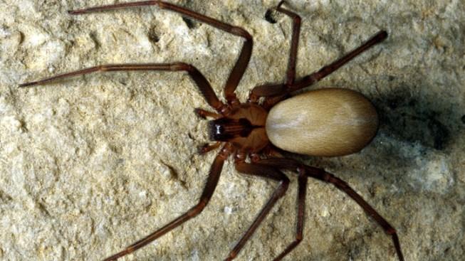 Army of Venomous Spiders Raids Man's Apartment