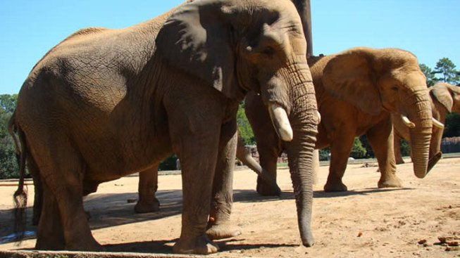 46-Year-Old Elephant Dies at Tyler Zoo