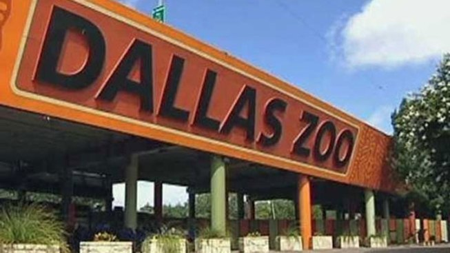 Dollar Day at the Dallas Zoo Is Tuesday