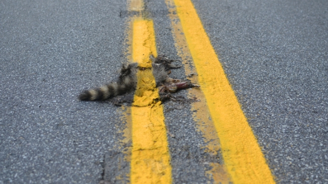 Texas House Candidate Sees Roadkill as Food, Not Waste