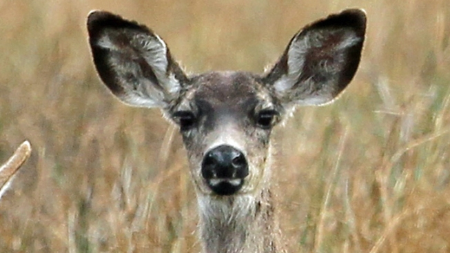 Deer Season Should be Good for Texas Hunters
