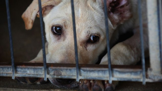 300 Dogs Rescued from Squalid Texas Kennel