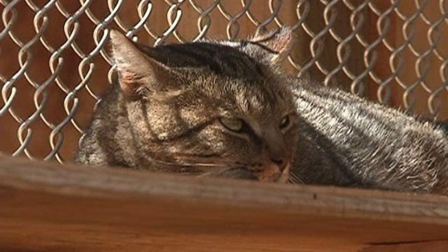 Catch, Neuter Plan Eyed for Feral Prison Cats