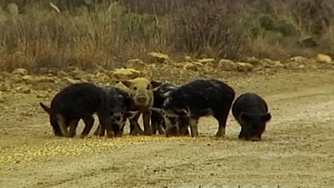 Man Fatally Crushed by ATV While Hunting Hogs