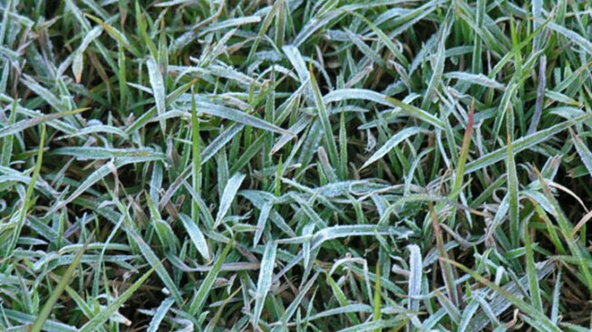 Frost Warning Issued for North Texas