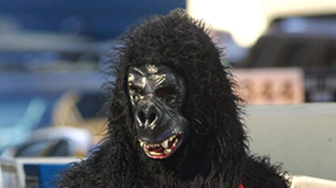 Man Chased by Person in Gorilla Costume Hit by Car