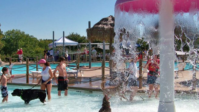 Hawaiian Falls Aims to Break World Record